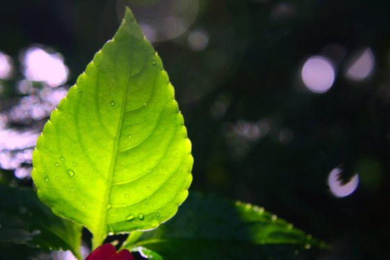 turning_to_a_new_leaf_by_daseinblackzangeltan